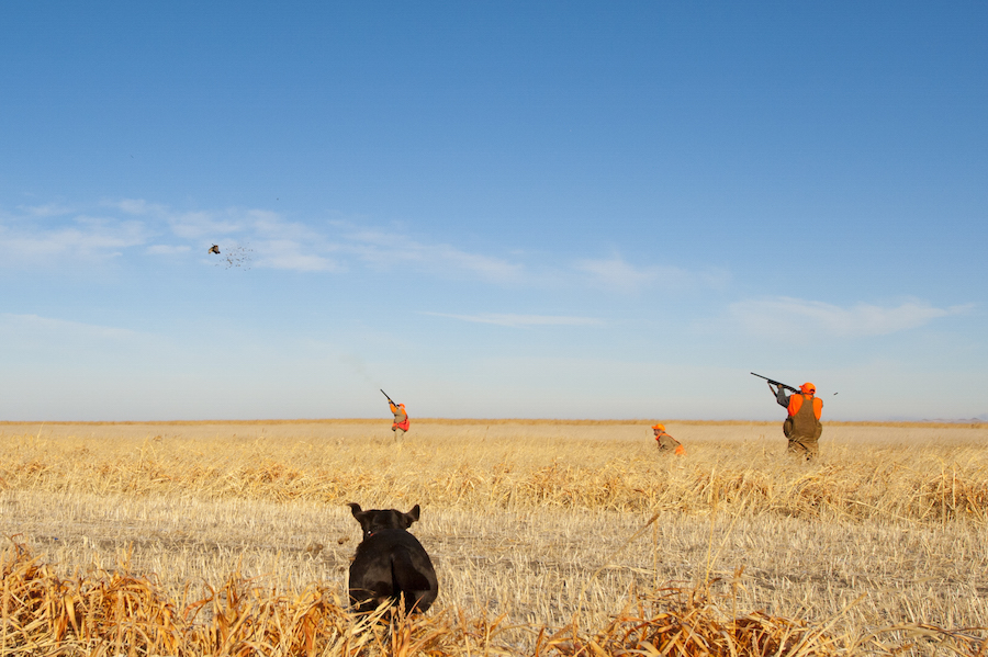 Best Pheasant Hunting Lodge SD